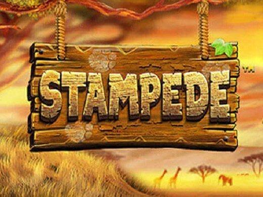 Stampede logo1